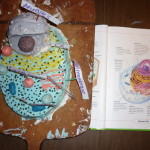 The edible animal cell cake – Lysosome cake balls