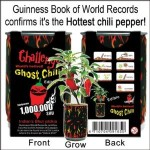 Grow your own ghost chilies – World's hottest pepper in your windowsill