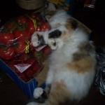 Cats sleeping in food boxes